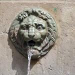 Lion1